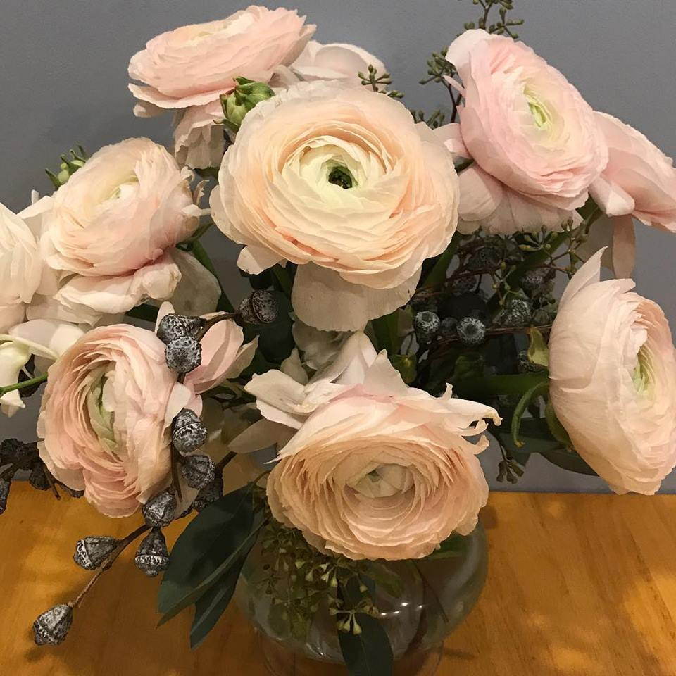 "Ranunculus Blooms ""Rose of the Spring"""