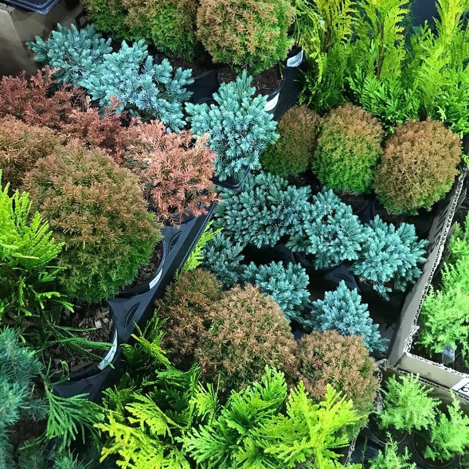 Photograph of Mixed Greens for the Holiday Season